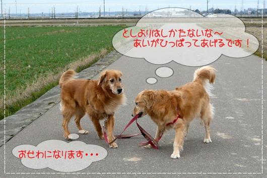 3,3お散歩5