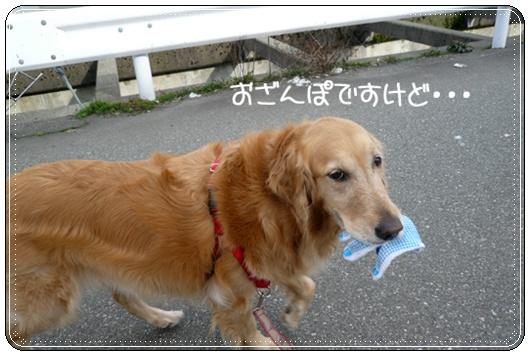 3,15お散歩2