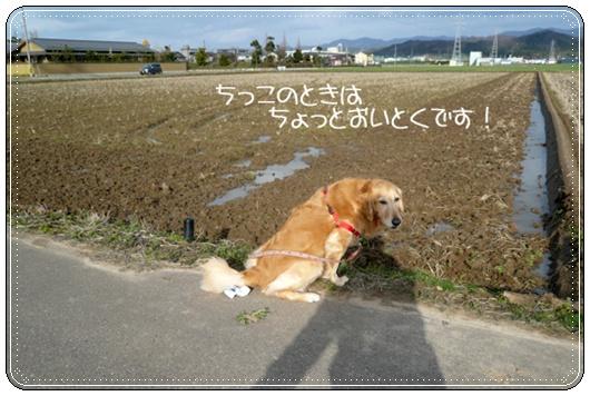 3,15お散歩5