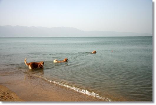 3,19琵琶湖11