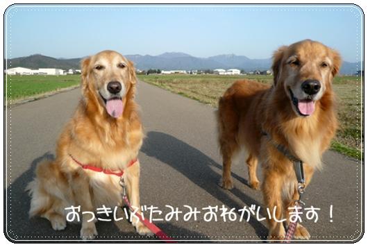 3,21お散歩3