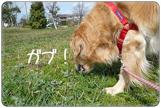 3,23お散歩7