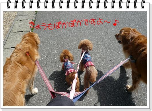 3,30お散歩2