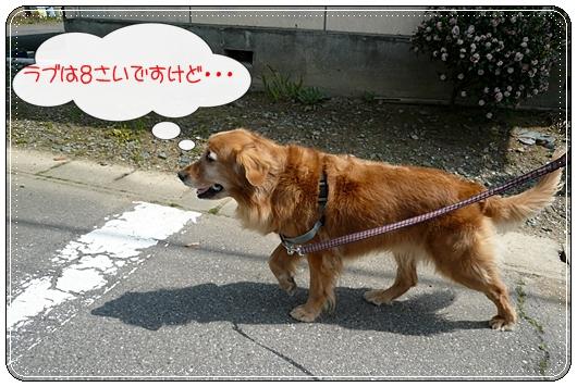 4,3お散歩4