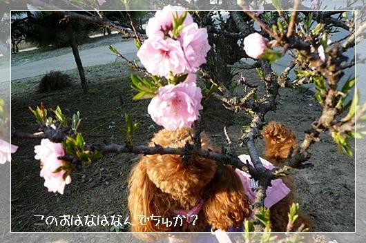 4,7お散歩2