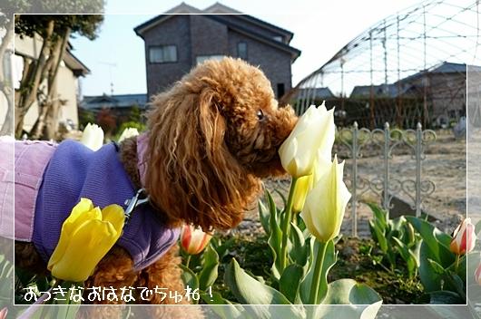 4,7お散歩5
