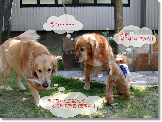 4,10お庭遊び10
