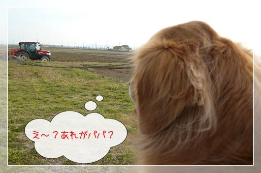 4,12お散歩3