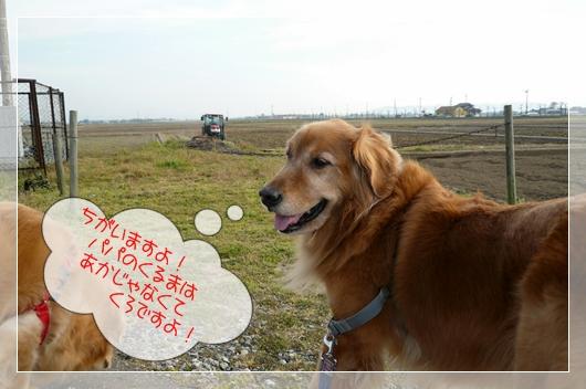 4,12お散歩4