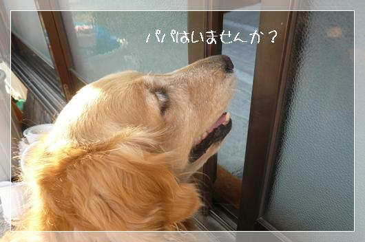 4,12お散歩11