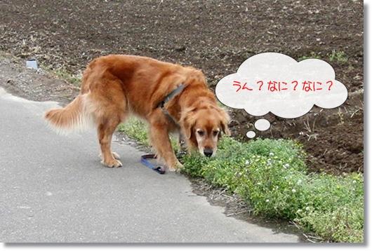 4,16お散歩2