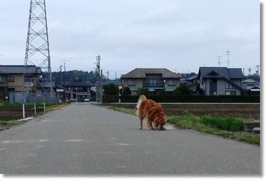 4,16お散歩5