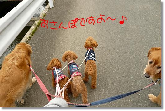 4,21お散歩1