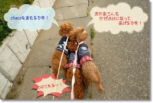 4,21お散歩6