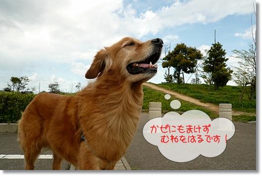 4,21お散歩10
