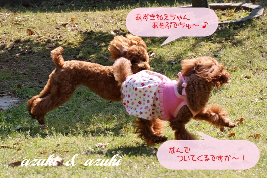 5,1お庭遊び6