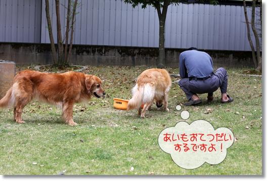 5,4お庭遊び1