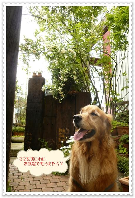5,8お散歩11