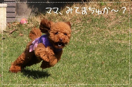 5,9お庭遊び9