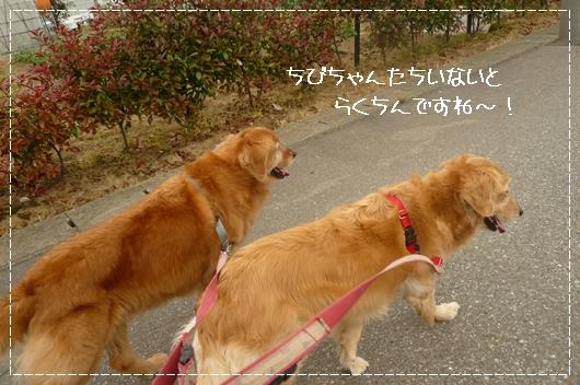 5,14お散歩7