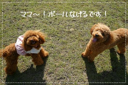 5,13お散歩16
