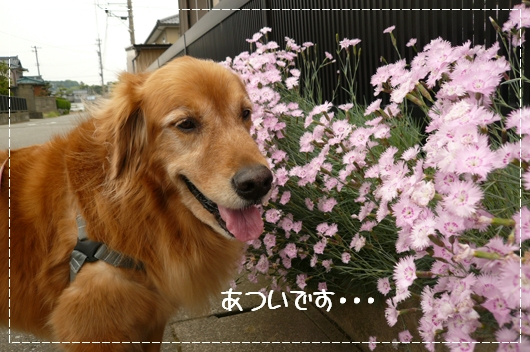5,21お散歩2