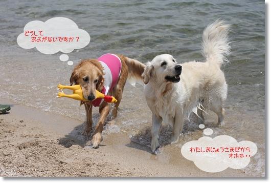 6,3琵琶湖8