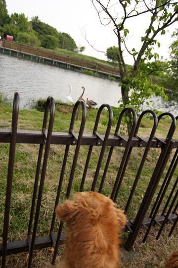 6,4琵琶湖21