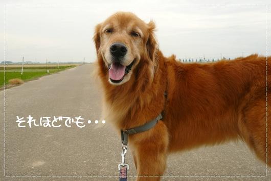 6,5お散歩3