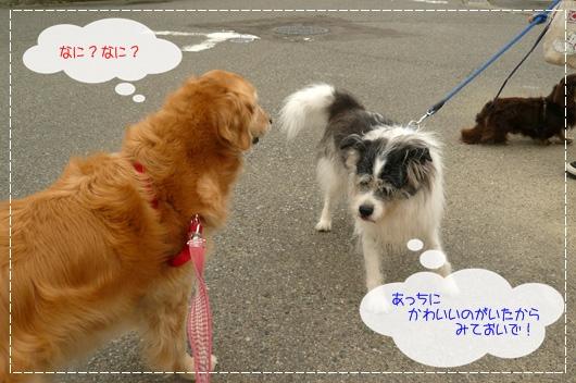 6,5お散歩6