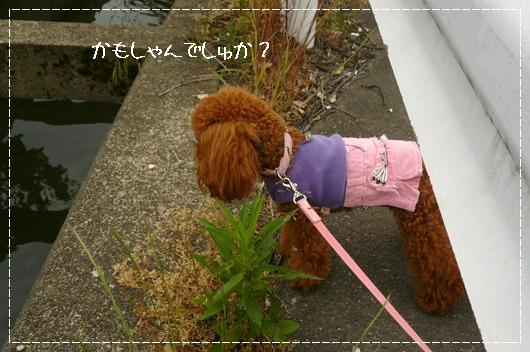 6,5お散歩11