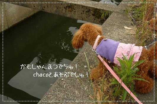 6,5お散歩12