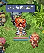 かぼちゃ再び!