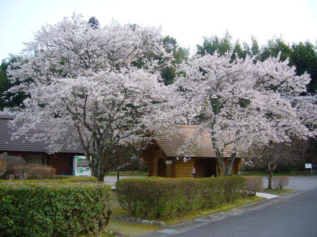 2012-04-15_0009.jpg