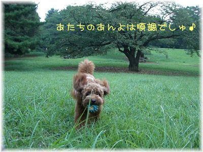 20080913_3.jpg