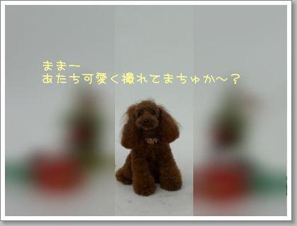 20080923_2.jpg