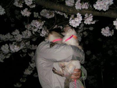 お花見~タヌさん&エピさん