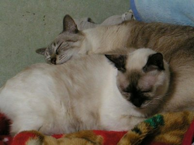 仲良く寝んねのタヌさん&エピさん
