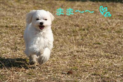 IMG_1665きゅー11まま