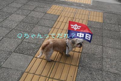 IMG_1778きゅー犬