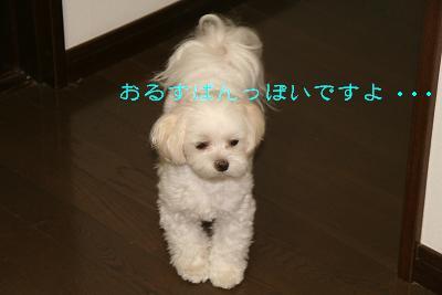 IMG_6298傾げ2