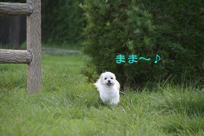 IMG_6282傾げ10
