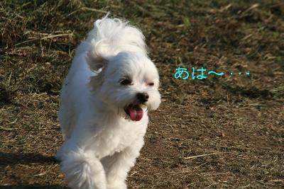IMG_6346泥8