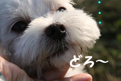 IMG_6348泥10