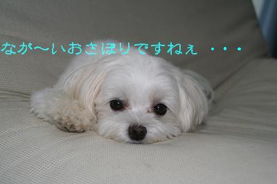 IMG_6474さぼり1