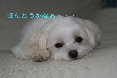 IMG_6475さぼり2