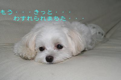 IMG_6476さぼり4