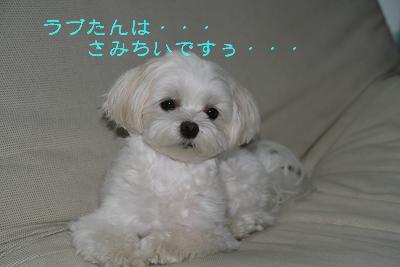 IMG_6479さぼり5