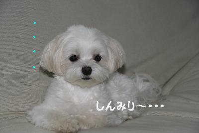 IMG_6481さぼり5