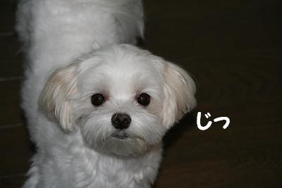 IMG_6602栗1じ